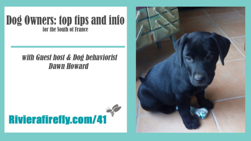 41: Essential Dog Tips, toys, care , health, walks, medical emergency, refuges