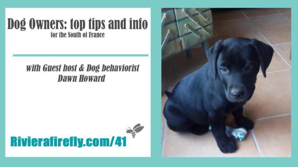 41: Essential Dog Tips, toys, care , health, walks, medical emergency, refuges